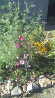 Blumen im Sommer